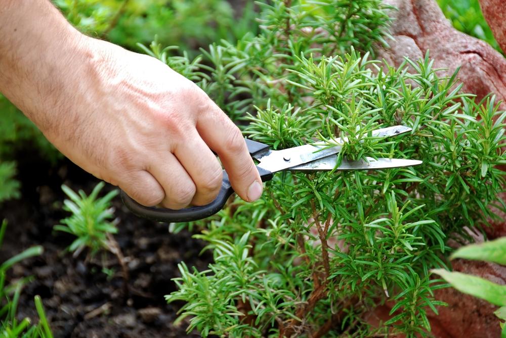 grow your herbs
