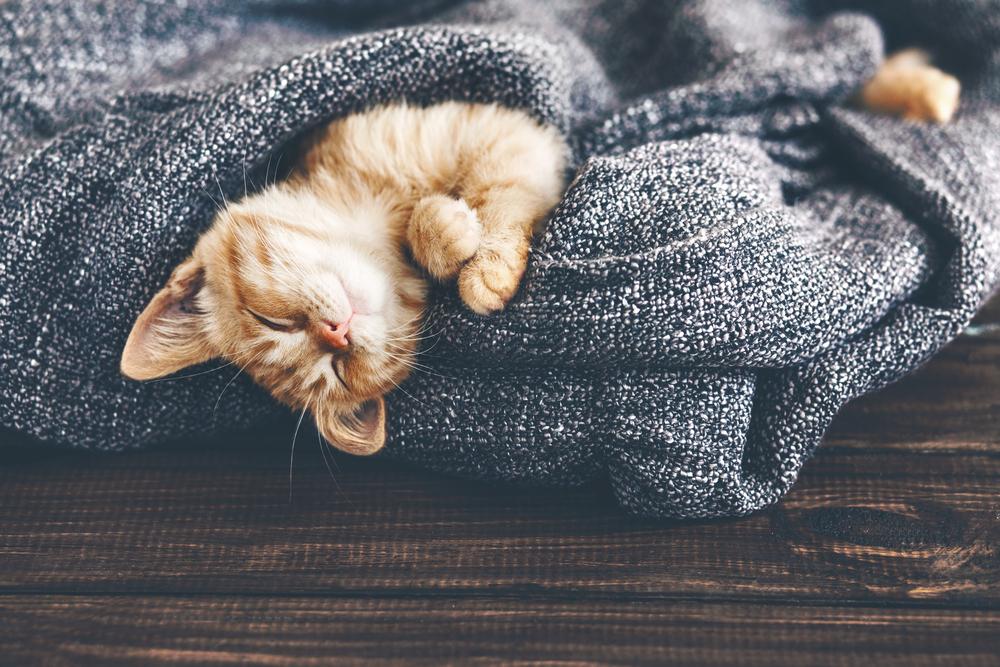 too-little-sleep